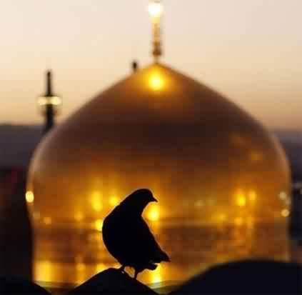 دنلود مداحی آی کبوتر که نشستی روی گنبد طلا